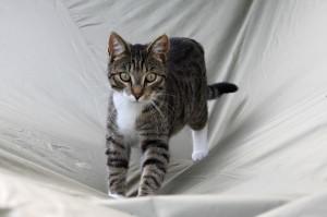 cat-144848_640