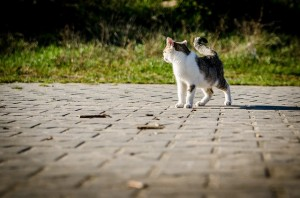 cat-256192_640