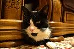 cat-273450_150