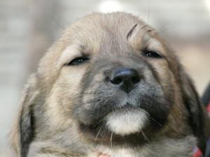 dog-64819_640